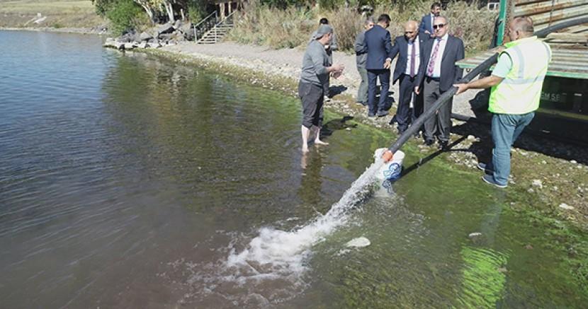 DSİ Çıldır Gölüne 350 bin sarı sazan balığı yavrusu bıraktı