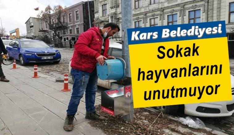 Kars Belediyesi, sokak hayvanlarını unutmuyor