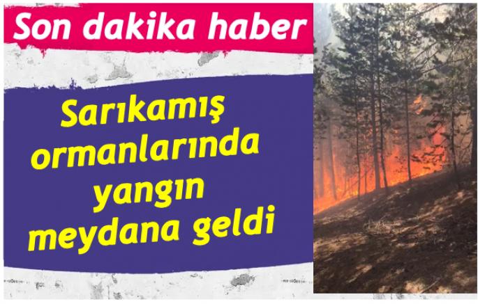 Sarıkamış ormanlarında yangın meydana geldi